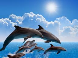 Webinar: ✩ Delphin Reiki Trilogie ✩ 3 Einweihungen ✩ Urkunde ✩