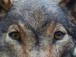 Webinar: Schamanische Krafttierreise zur Selbstfindung/ Leopard und Adler