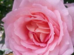 Webinar: Kostenfreie Einzelberatung zu Liebe und Seelenpartnerschaft