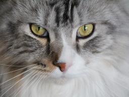 Webinar: Tierheilbehandlung Katzen