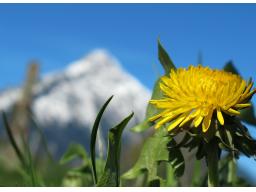 Webinar: Frühlingsbeginn: Das Silvester der Astrologen
