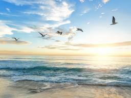 Webinar: Impulsvortrag - Meditation, der Weg an deine Lebensquelle