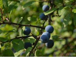 Webinar: Zur Erdung: Stärkende und reinigende Pflanzenkräfte für den Herbst