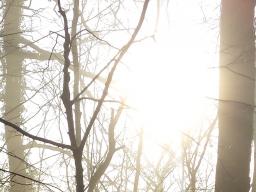 Webinar: Meditation mit der Sonne: Lösung von Karma und Illusion