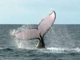 Webinar: Botschaft und Weihe in die Kraft der Wale