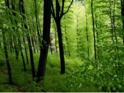 Webinar: Fantasiereise Lebenskraft des Baumes