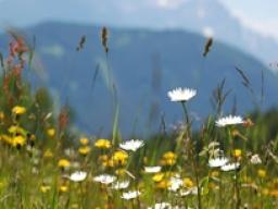 Webinar: ♡♥ ♪♪ Engel Heilatelier - Reise zu den Erzengeln ♪♪