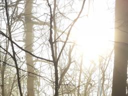 Webinar: Geführte Meditation und Energie Arbeit: Verbindung mit unseren Engeln
