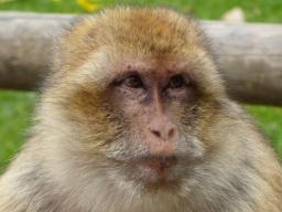 Webinar: Neue Botschaften der Tiere