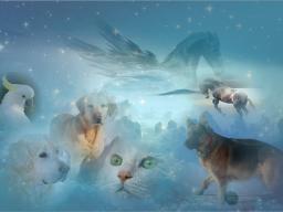 Webinar: Energiesitzung für Tiere findet nicht statt!
