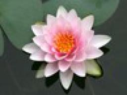 Webinar: Meditation, Aktivierung der Engelenergien