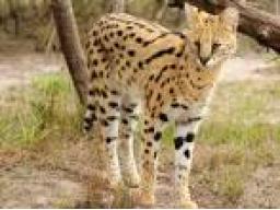 Webinar: Tierheilseminar