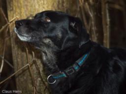 Webinar: Ängste auflösen bei Tieren