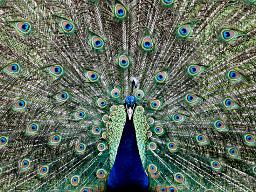 Webinar: Neues Bewusstsein - Manifestationen eines erfüllten Lebens, Modul I