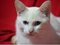 Webinar: Wie Dir Tiere weiter helfen ?