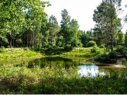 Webinar: Waldsee der Regeneration -Meditation