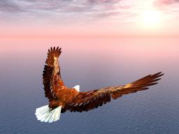 Webinar: Positiv EFT: Hol dir die Energie der Freiheit