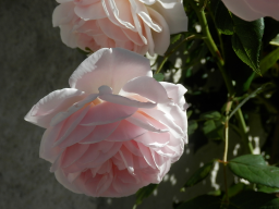Webinar: Zur Sonnenfinsternis mit Maria Magdalena: Die weiblichen Mysterien