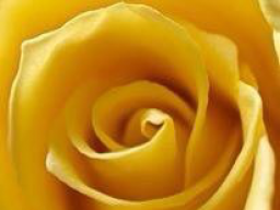 Webinar: Liebesbotschaft für dich