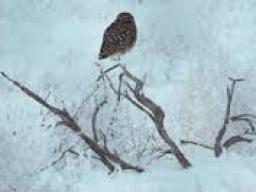 Webinar: Wintersonnenwende - unser Auftakt zu den Raunächten