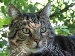 Webinar: Morphisches Feld Lesen :: 30 Minuten Tierkommunikation :: Einzelsitzung