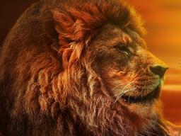 Webinar: NEU! 8.8.2019 *Das Löwentor* Nutze die Energien dieser magischen Portalöffnung! - Inkl. intensiver, nächtlicher Fernsitzung