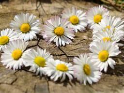 Webinar: HAPPY VALENTINE ♡♡♡ die Liebe feiern