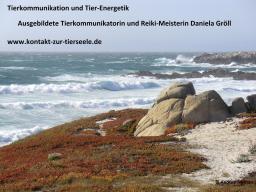 """Webinar: Meditation """"Delfine und Wale"""" trainiere dein inneres Bildersehen"""