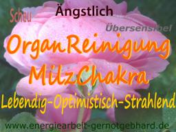 Webinar: OrganReinigung-Das Milz-Chakra, Licht als Elexier