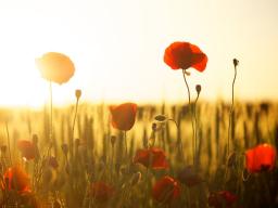 Webinar: Spirituelle Trauerbegleitung - Einzelsitzung