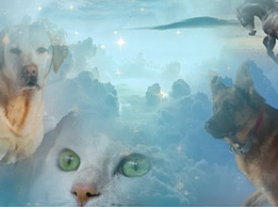 Webinar: Krafttier Reise zur Selbstfindung/ der Pelikan
