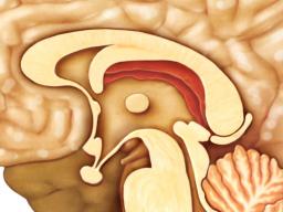 Webinar: Astromedizin 11.2:Endokrines System-Zirbeldrüse