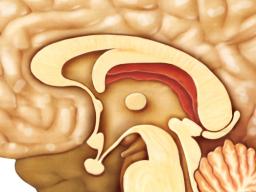 Webinar: Astromedizin 11.3: Hypophyse und Hypothalamus