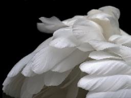 Webinar: EINZELBERATUNG, spirituelles Coaching, Ablösungen und Neuausrichtung