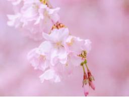 Webinar: Dein Monat April