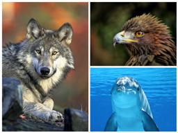 Webinar: Die Welt der Krafttiere