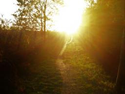 Webinar: Chela´s Erdmagie Guten Morgen Orakel
