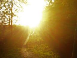 Webinar: Chela´s Heilstein Guten Morgen Orakel