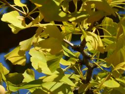 Webinar: Mit den Zwergen und den Riesen durch den Herbst