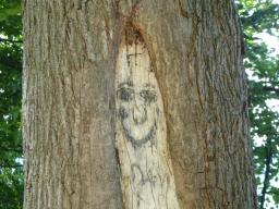Webinar: Zum Vollmond im August: Unseren Lebensbaum entfalten - ein längeres Webinar