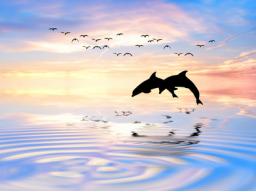 Webinar: NEU - Mediale Botschaften erhalten - Psychic Messages Reiki