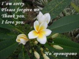 Webinar: Ho´oponopono - Das hawaiianische Vergebungsritual