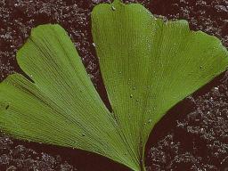 Webinar: Plantas medicinales del elemento tierra - ASTROMEDICINA SEGÚN PARACELSO