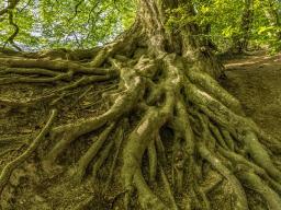 Webinar: ROOTS - Zurück zu den Wurzeln - Spagyrische ABRAHAM Mischungen