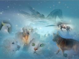 Webinar: Vorstellung Ausbildung Quantox-Tierlichtheiler