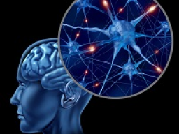 Webinar: Astromedizin 9.4.: Zentrales und peripheres Nervensystem