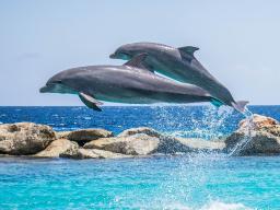 Webinar: Geführte Meditation (Reise zu den Delphinen)