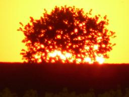 Webinar: Samhain- schamanisches Medizinradritual im Kontakt der Ahnen