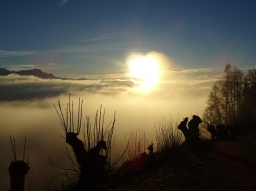 Webinar: Das Schöpfungslicht in unseren Inkarnationen: Mit Jesus und den Engeln durch das Jahr