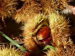 Webinar: Die Früchte der Erde und die Früchte unseres Lebens